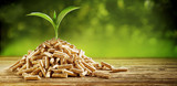 Seedling sprouting from a pile of wood pellets - 164840287