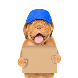 Funny dog in cap delivering a big package. isolated on white background