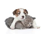 Cute jack russell puppy tulenie kotka. Samodzielnie na białym tle