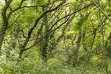 dense forest detail