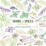 frame composed of hand drawn colored herbs and spices - 164849247