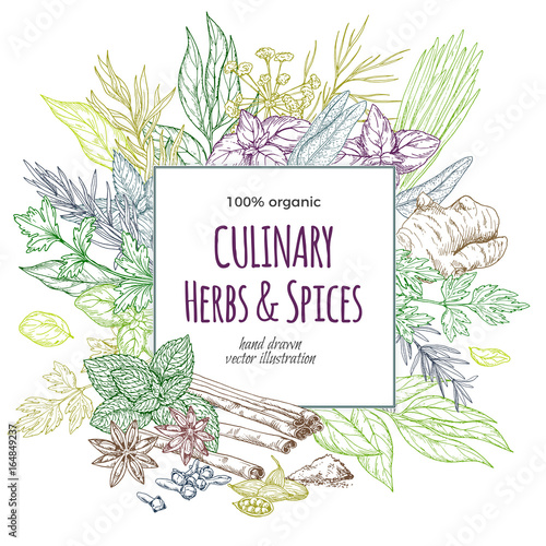 Square banner surrounded by colored sketch herbs and spices