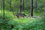 Long abandoned bench in the forest. Uktussky forest Park, Ekaterinburg, Sverdlovsk oblast, Russia.