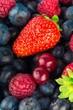 Berry. - 164862296