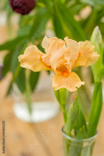 orange iris in vase