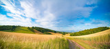 Panorama of wheat field in the morning in Kansas - 164863893