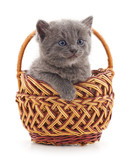 Mały kotek w koszyku.