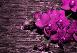 Pink Orchid flowers on a dark stone background.