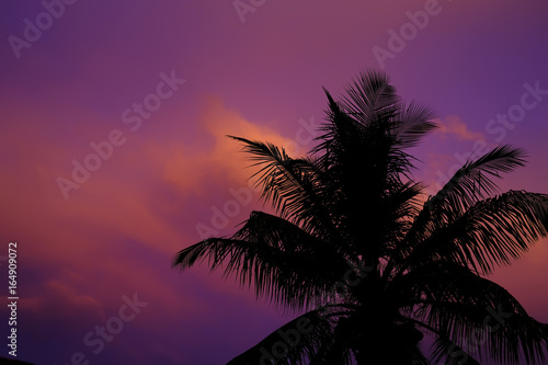 Foto op Canvas Crimson silhouetted palm trees against vivid florida sunset