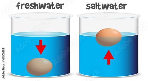 Staande foto Kids Science experiment for freshwater and saltwater