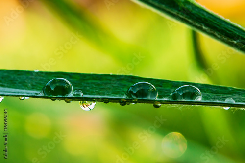 Large water droplets, rain on the green grass in delicate yellow background blur