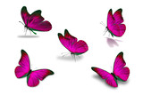 fifth pink butterfly - 164918263