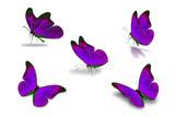 fifth purple butterfly - 164918440