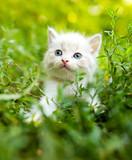 Mały kotek w zielonej trawie w parku