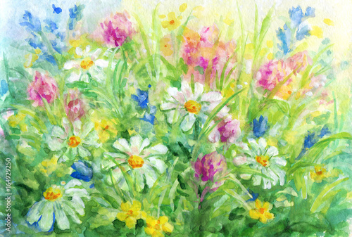 Wild flowers - watercolor background painting. - 164929250