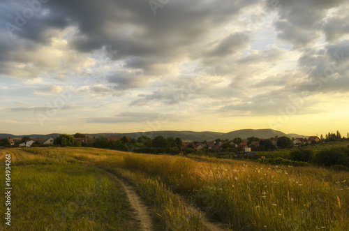 Poster Zwavel geel scenic road in summer outdoor in nature. summer walk in nature