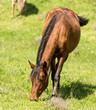 A horse in the pasture on a green lawn - 164939446