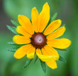 summer season yellow flower bud isolated at abstract background