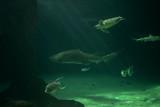 Tiburón, tortuga y peces en el mar