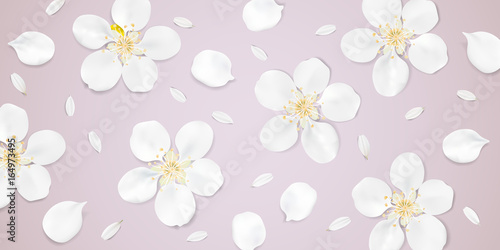 Pastel background with white flowers.