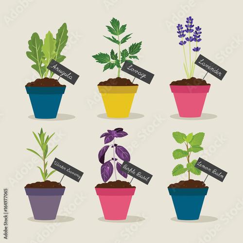 Herb garden with pots of herbs set 4