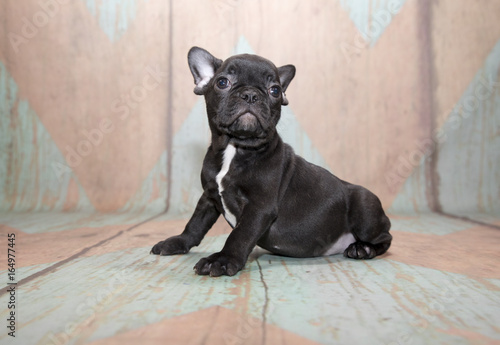 Deurstickers Franse bulldog French Bulldog on patterned background