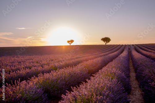 Deurstickers Lavendel Stunning landscape with lavender field at sunset in Provence France