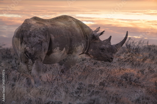 rhino at sunrise