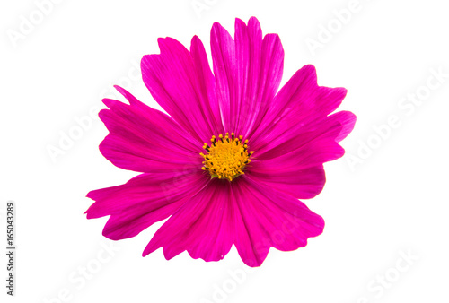 Foto op Canvas Roze Flower of the Cosmos isolated