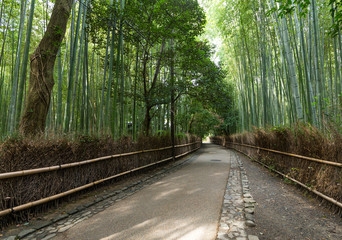 Green Bamboo forest in Japan