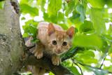red kitten on the tree