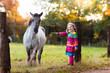 Little girl feeding a horse - 165063034