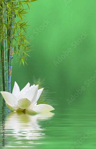 fleur de lotus et tiges de bambou, fond vert