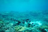 Podwodne sceny z miejsca na kopię