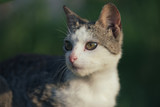 Adorable cat. Cute cat at front or back yard. Young animal in garden.