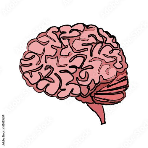 Human Brain For Medical Healthy Memory Anatomy Design Buy Photos
