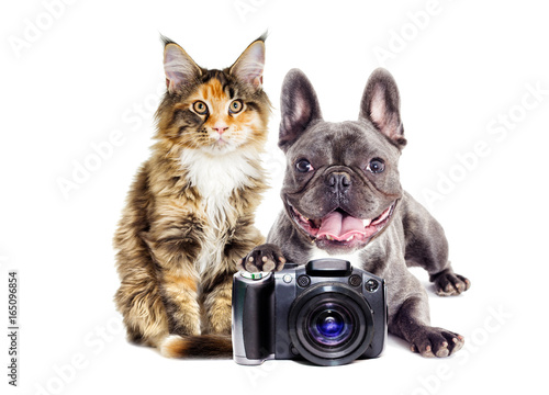 Dog and cat photographer Poster