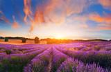 Lavender field, France - 165097887