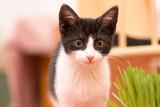 Mały kotka zjada zieloną trawę