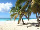 tropical island beach with palmtrees - 165155028