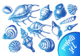 Ink hand drawn set of different types mollusk sea shells. Marine elements collection for design, Template for cards, banners, posters. Vector illustration. - 165169864