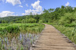 Wooden walkways through the lakes. - 165172231