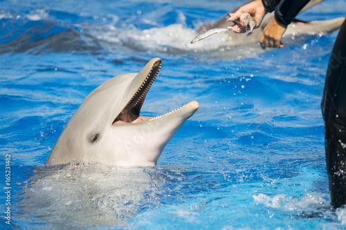 Fotobehang Dolfijn Delfín