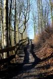 Weg bergauf  zwischen Bäumen mit Holzzaun links