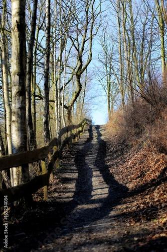 Foto op Canvas Weg in bos Weg bergauf zwischen Bäumen mit Holzzaun links