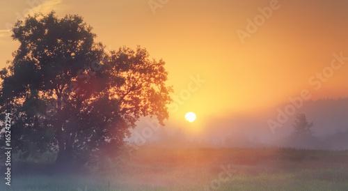 Plexiglas Beige Misty summer sunrise