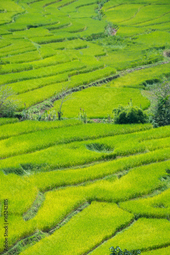Tuinposter Rijstvelden Green Terraced Rice Field in Nan, Thailand.