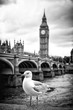 Seagull and Big Ben