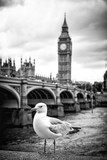 Seagull and Big Ben - 165302467