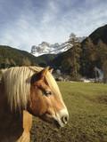 Cavallo in montagna